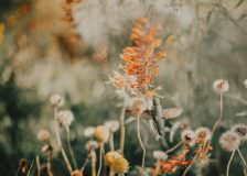 Hummingbirds, Society 6 prints for sale, Justyna E Butler Photography