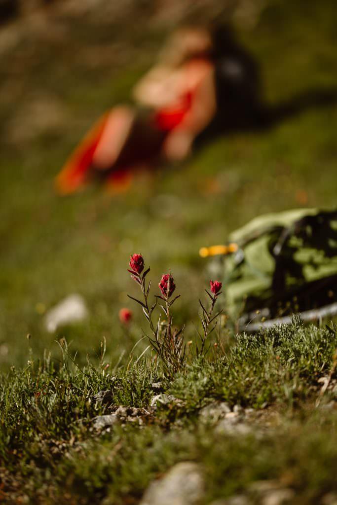 Alpine Wildflowers Adventure