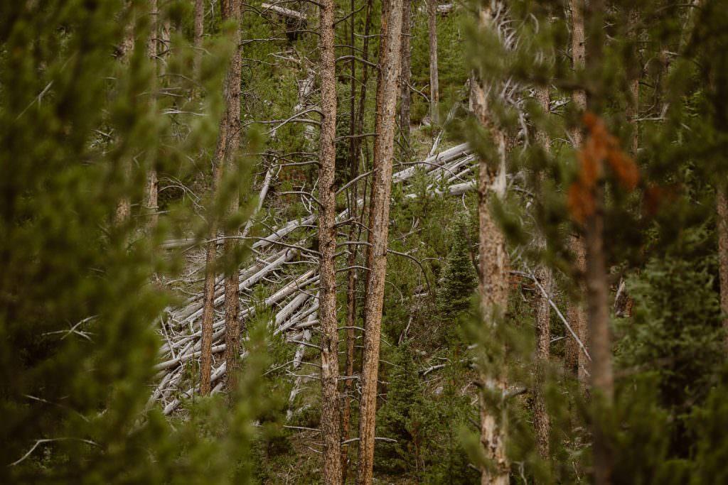Wyoming Elopement Photographer