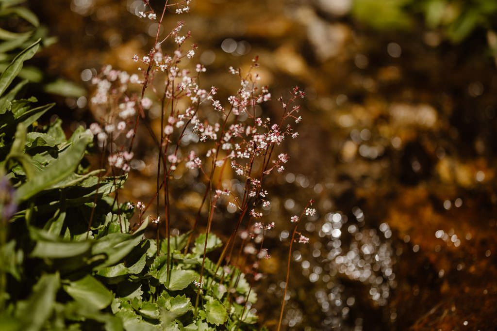 Summer alpine plants